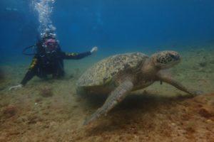 【小琉球潛水】水肺潛水、浮潛體驗與海龜共游探險琉球嶼