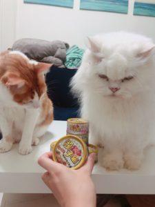 【貓罐頭推薦】貓奴寵愛貓咪的機能保健主食罐-梅小姐貓奴日記